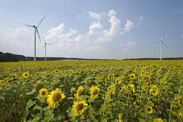 Greenpeace Energy Windpark Buchhain