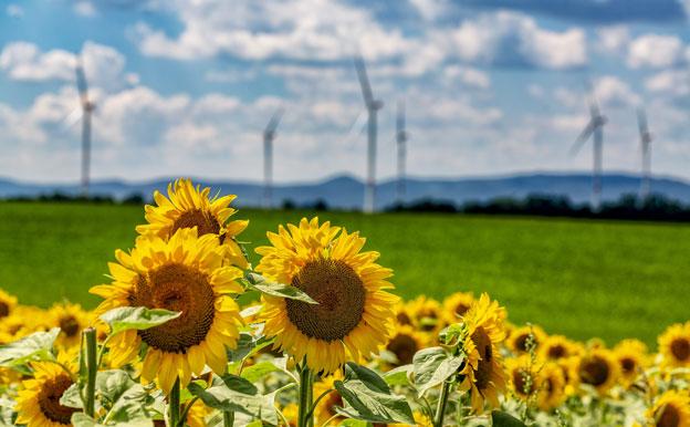 Titelbils Sonnenblumen Windräder Windkraft