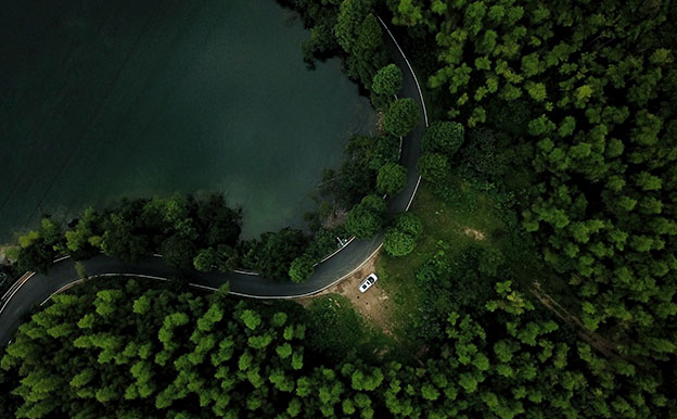 Titelbild Straße Wald